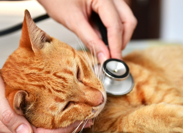 feline-leukemia-virus-cats.jpg